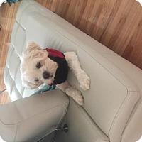 Adopt A Pet :: Bucky - Ridgefield, CT