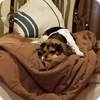 Adopt A Pet :: Willow - cicero, NY