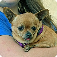Adopt A Pet :: Lucy - Palmdale, CA