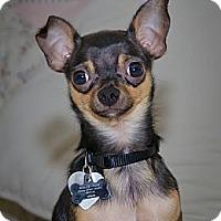 Adopt A Pet :: PupCake - Villa Rica, GA