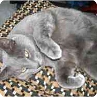 Adopt A Pet :: Casper - Strathmore, AB