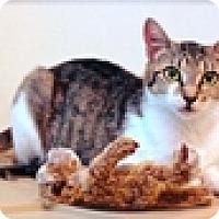 Adopt A Pet :: Marigold - Vancouver, BC