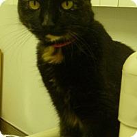 Adopt A Pet :: Mystery - Hamburg, NY