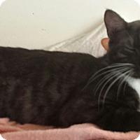 Adopt A Pet :: Alcede - Cerritos, CA