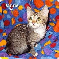 Adopt A Pet :: Jamie - Bentonville, AR
