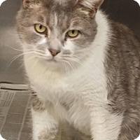 Adopt A Pet :: Mitchell - Tinton Falls, NJ