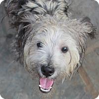Adopt A Pet :: Doogie - Norwalk, CT