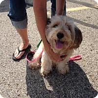 Adopt A Pet :: Bella - Warsaw, IN