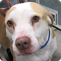Davenport Ia Labrador Retriever Meet Buddy Amp Lucky A Dog For Adoption
