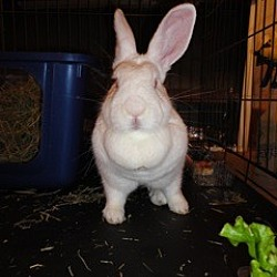 Photo 2 - New Zealand for adoption in Holbrook, New York - Brigit