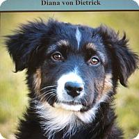 Adopt A Pet :: DIANA VON DIETRICK - Los Angeles, CA