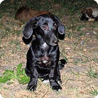 Adopt A Pet :: Betsy (Courtesy Listing) - Woonsocket, RI