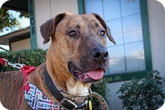 Plott Hound Mix Dog for adoption in Fort Worth, Texas - CHAD