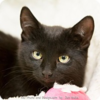 Adopt A Pet :: Annie - Fountain Hills, AZ