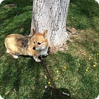 Adopt A Pet :: Maddie - Lomita, CA