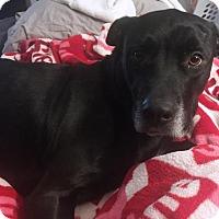 Adopt A Pet :: SALEM - DeLand, FL