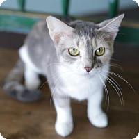 Adopt A Pet :: Brandi - San Antonio, TX