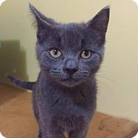 Adopt A Pet :: Tonto - Richmond Hill, ON