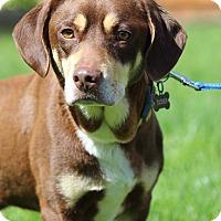 Adopt A Pet :: Tucker - Milford, CT