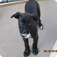 Adopt A Pet :: RINGO - Lincolndale, NY