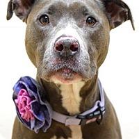 Adopt A Pet :: Emelia - Dublin, CA