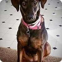 Adopt A Pet :: Athena - Woodstock, GA