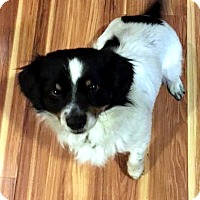 Adopt A Pet :: Archie - Tijeras, NM