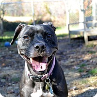 Adopt A Pet :: Lucy - Broadway, NJ