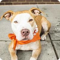 Adopt A Pet :: Shadow - Mooresville, NC