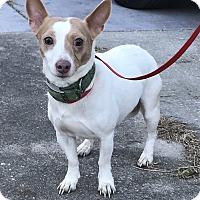 Adopt A Pet :: Mr. Biggs - Palm Harbor, FL