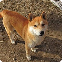 Adopt A Pet :: Banner - Aurora, CO