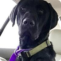 Adopt A Pet :: 'Jet' - Fresno, CA