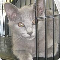 Adopt A Pet :: Banana - Dallas, TX
