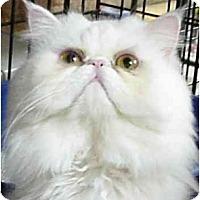 Adopt A Pet :: Glacier - Chesapeake, VA