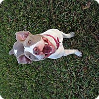 Adopt A Pet :: August - Orlando, FL