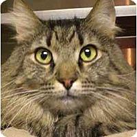 Adopt A Pet :: Scrappy - Lombard, IL