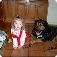 Adopt A Pet :: Buddy - Adoption Pending - Wapwallopen, PA