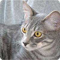 Adopt A Pet :: Foxy - Laguna Woods, CA