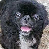 Adopt A Pet :: Sammy - Portland, ME