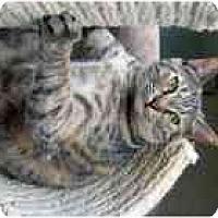 Adopt A Pet :: Reba - Marietta, GA