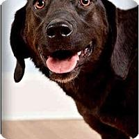 Adopt A Pet :: Meeka - Owensboro, KY