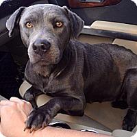 Adopt A Pet :: Lacey - Miami, FL