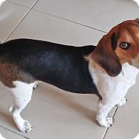 Adopt A Pet :: K-Dee - Palm Bay, FL