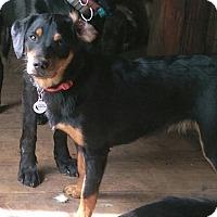 Adopt A Pet :: Penny - Charlestown, RI