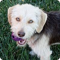 Adopt A Pet :: Mitchell - 24 lbs! - Yorba Linda, CA