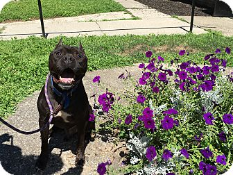 Terrier (Unknown Type, Medium) Mix Dog for adoption in Walden, New York - Blaze