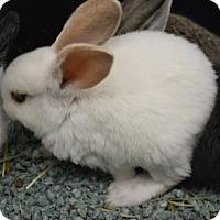 Adopt A Pet :: Bun - Ogden, UT