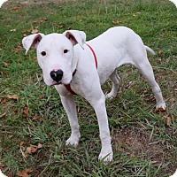 Adopt A Pet :: Franklin Delano Roosevelt - Sacramento, CA