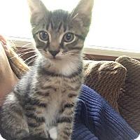 Adopt A Pet :: Penny - Southington, CT