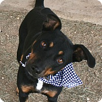 Adopt A Pet :: KOLOE - Pilot Point, TX
